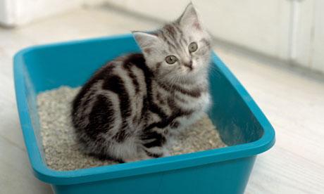 Как приучить домашнее животное к лотку